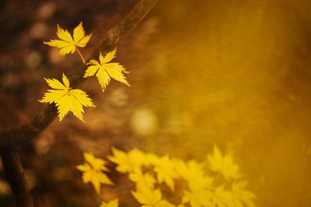 黄色散らばる
