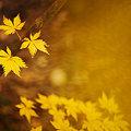 写真: 黄色散らばる