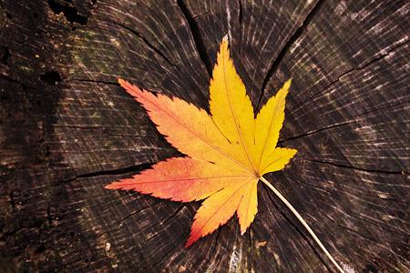 トルネードな秋