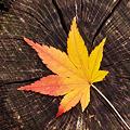 Photos: トルネードな秋