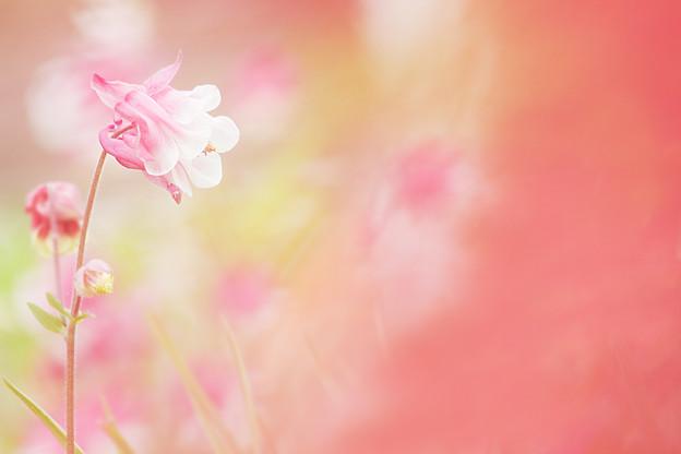 赤いモヤと花