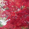 写真: 足利学校さままつりの鮮やかな紅葉2014.11.24