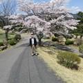 足利カントリークラブ多幸コース満開の桜と幹事2017.4.13