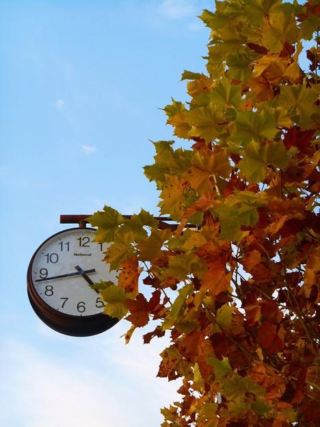 黄昏に時を刻む~晩秋の街路樹、平木山のプラタナスの黄葉~