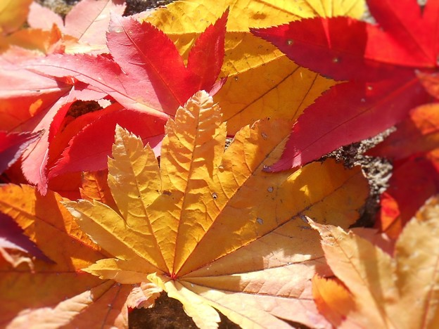 佛通寺の落ち葉たち