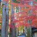 杉木立の佛通寺参道を行く。