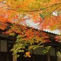 開山堂の秋