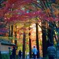 Photos: 参道の秋