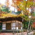 写真: 輪蔵の秋