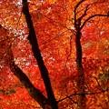 烈しく燃える秋