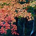 写真: 深山幽谷の秋・紅葉
