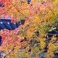 Photos: 古刹・大方丈の秋