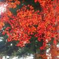備後路・錦秋の杉木立