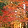 佛通寺 参道の秋