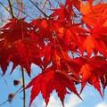 写真: 紅葉最終便~寒波到来~