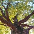 寒波なんて物ともしない常緑樹♪