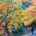 備後路 紅葉の並木道