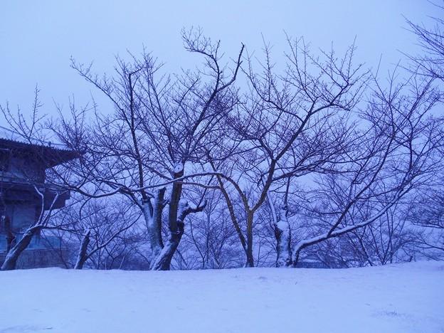 元旦の千光寺山は雪のなか