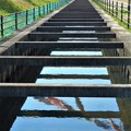 黒崎水路に鯉泳ぐ@桜の季節