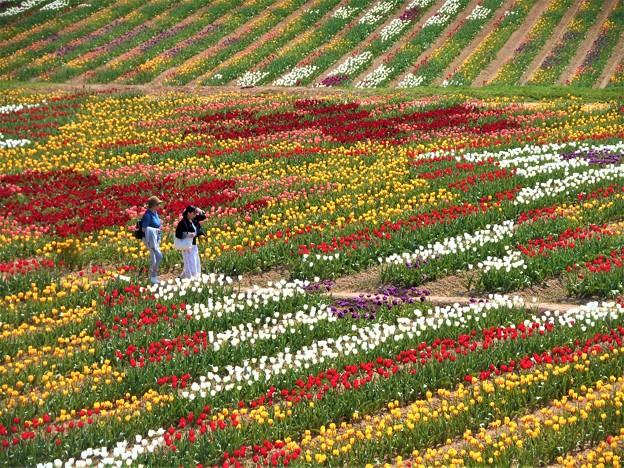 Photos: 花絵のなかを散歩する@チューリップ娘たち@世羅高原