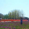 写真: 爽やか鮮やか@世羅高原の春