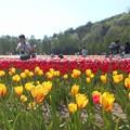 写真: パパ早く撮って~@世羅高原の爛漫の春