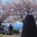 写真: 夫婦でお花見@海の見える丘@千光寺山