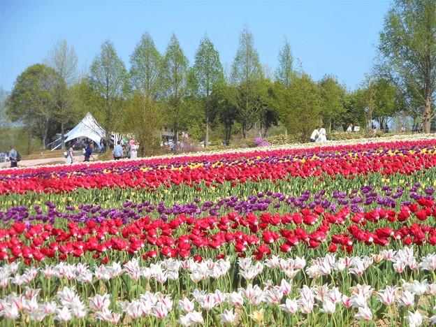 初夏の風が吹く@爽やかな季節@快晴の世羅高原農場