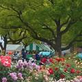 写真: ばら公園の賑わい@福山ばら祭