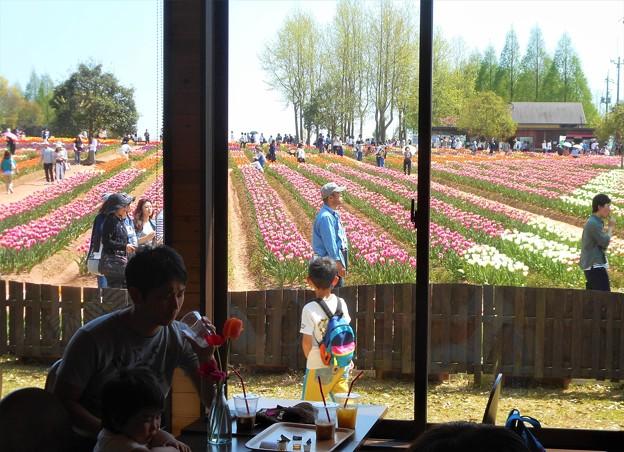 花カフェからの花風景@世羅高原農場