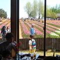 Photos: 花カフェからの花風景@世羅高原農場