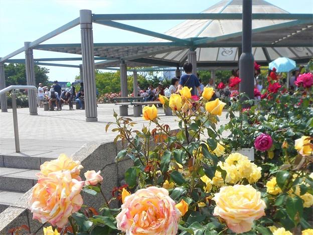 ばら花壇の屋上風景@福山ばら祭