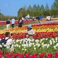 Photos: 春爛漫のチューリップ畑@世羅高原