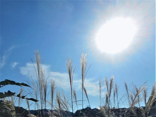 芒(すすき)の穂と 隕石のような火の玉