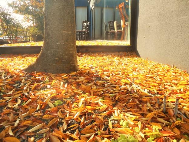 勉強堂の秋@御菓子処の裏庭にて