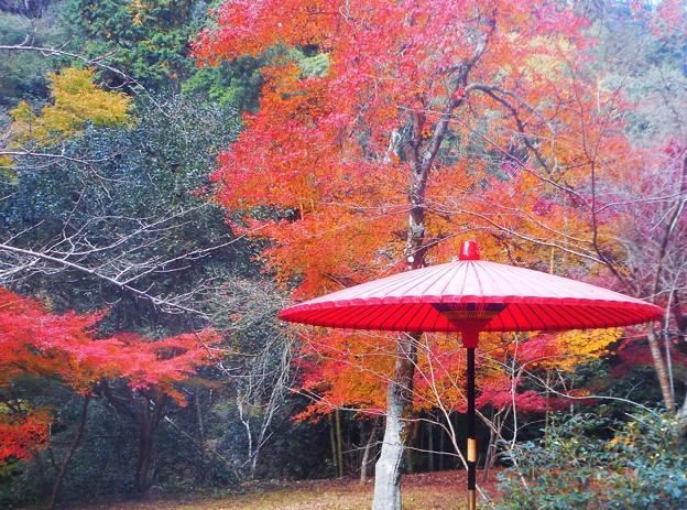 茶席の京和傘も紅葉中@佛通寺