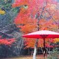 写真: 茶席の京和傘も紅葉中@佛通寺