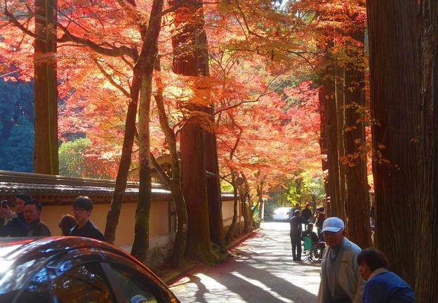 写真: 杉木立の参道の紅葉@深山幽谷・佛通寺