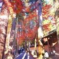 写真: 杉木立の紅葉@備後路・佛通寺参道