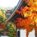 写真: 見上げれば多宝塔の秋@仏殿の紅葉@古刹・佛通寺