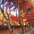 Photos: 参道の紅葉@晩秋の佛通寺