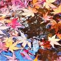 写真: 初冬の風と水のハーモニー@紅い落ち葉たち@瑠璃山