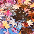 初冬の風と水のハーモニー@紅い落ち葉たち@瑠璃山