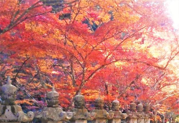 苔むす石灯篭と紅葉@佛通寺