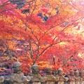 写真: 苔むす石灯篭と紅葉@佛通寺