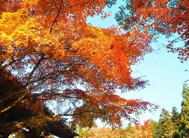 写真: 見上げれば 晩秋の佛通寺@総門前の紅葉