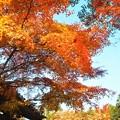 見上げれば 晩秋の佛通寺@総門前の紅葉