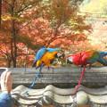 写真: 記念撮影ツーショット@錦秋の佛通寺
