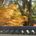 写真: 錦秋の佛通寺@境内からの眺め