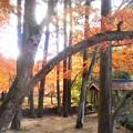 写真: 佛通寺川に架かる飛猿橋(ひえんきょう)の秋